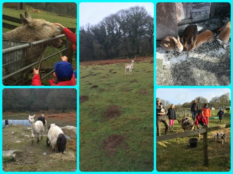 animals around coombe mill