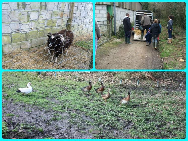 sad farm life