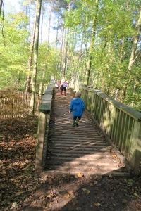 tree top trail